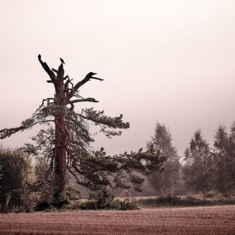 Foto Ingmar Elm