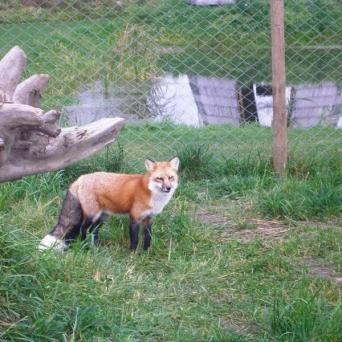 ALAVESKI ANIMAL PARK