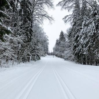 FJ1319 | Kirjeldus: Parimad suusarajad Eestis | Autor: Jandra Kõrran