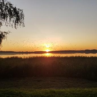 FJ1352 | Kirjeldus: Päikeseloojang | Autor: Taisi Kärg