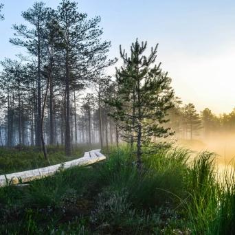 FJ1375 | Kirjeldus: Hommik Luhasoos | Autor: Kaisa Äärmaa